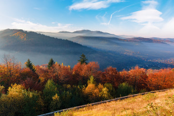 foggy sunrise in carpathian mountains. stunning nature scenery in fall season. trees in red and orange foliage. slope in weathered grass. distant ridge in misty atmosphere beneath a blue sky