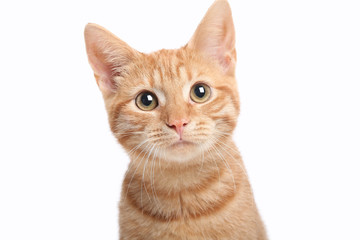 Beautiful cute orange cat