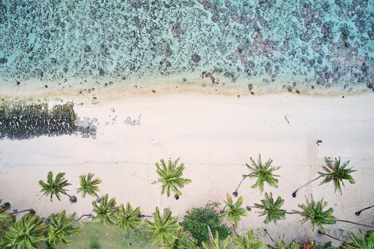 Aerial of palm trees and blue water with coral reef on Coral Coast, Fiji