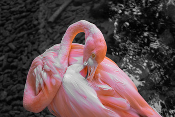 Hiding flamingo