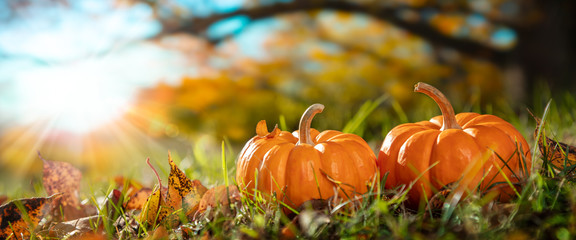 Thanksgiving - Two Mini Pumpkins In Grass With Tree And Sunset Background