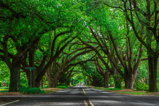 Tree Lined Road in Aiken