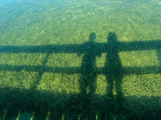 Shadow of a couple in the sea weed