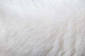 background of white cat fur-image