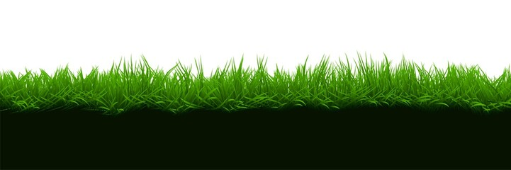 Grass on brown soil isolated on white background