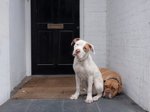 White and brown dog sitting outside in front of a black door