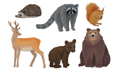 Wild Forest Habitants Drawn In Realistic Manner Vector Illustrations Wall mural