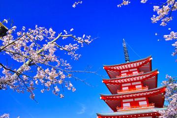 Tuinposter Donkerblauw 新倉山浅間公園内の五重塔と満開の桜