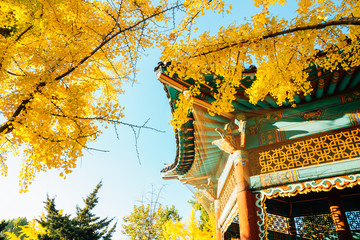 Fototapeten Honig Korean traditional pavilion with autumn ginkgo trees at Children's Grand Park in Seoul, Korea
