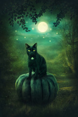Black cat on the pumpkin
