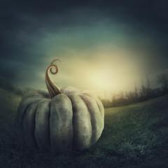 Big green pumpkin