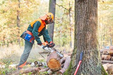 Waldarbeiter in Schutzausrüstung sägt Baumstamm