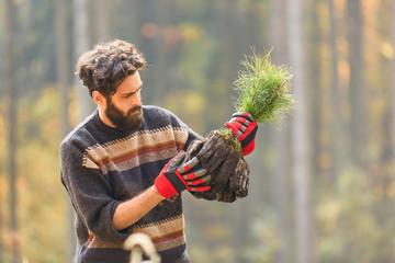 Forstwirt in einer Baumschule mit Kiefer Setzling