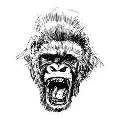 Hand drawn Monkey. Natural colors. Illustration. Isolated on white background