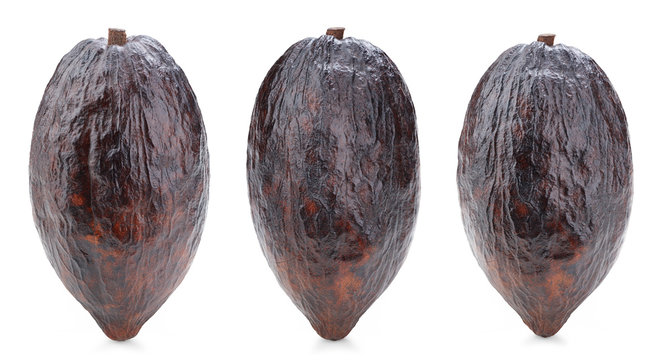 Cacao pod collection isolated on white background. Cacao pod Isolated with clipping path