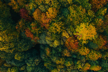Aerial view of autumn tree tops. Wall mural