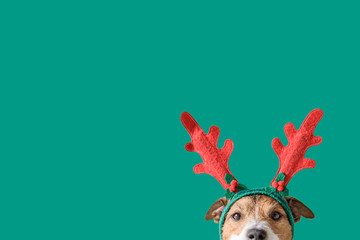New year and Christmas concept with Dog wearing reindeer antlers headband against solid green...