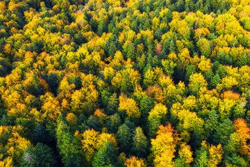 Foto op Canvas Meloen Autumn forest as a background from air. Natural landscape from drone in the autumn time. Forest - image