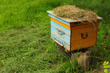 Wooden beehive on green grass