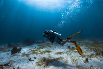 Wall Mural - Woman scuba diver swims alone underwater over the sea bottom covered with a sea weed