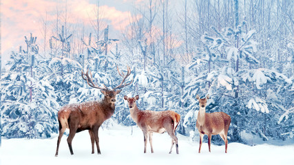 Fototapete - Group of noble deer in a snowy winter forest at sunset. Christmas fantasy image in blue, pink  and white color. Snowing.