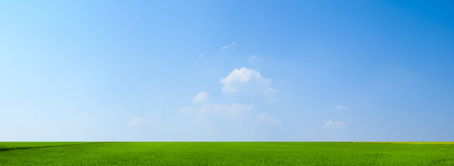 Photo sur Aluminium Bleu ciel sky and green field background panorama