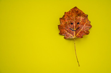 red autumn aspen leaf with smile on yellow