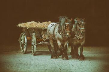 Foto auf AluDibond Pferde zwei Pferde bei der Ernte