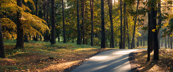 Foto op Aluminium Weg in bos Colorful autumn morning in a city park. Panoramic view with trees, yellow-orange foliage, park asphalt path and side sunlight and highlights