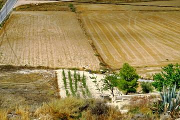Champs cultivé en Espagne. Andalousie.