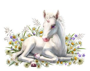 Baby unicorn lies in flowers, isolated on white