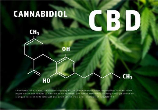 CBD Oil Infographic with Molecular Formula Illustration