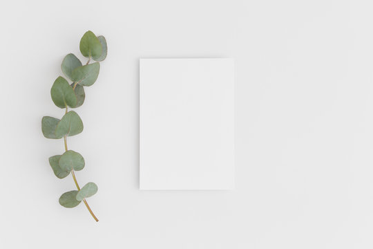 Top view of a white card mockup with branch of eucalyptus on a white table.