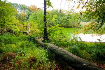 Keuken foto achterwand Bos in mist See im Wald am Tag im Herbst - Jasmund Nationalpark auf Insel Rügen
