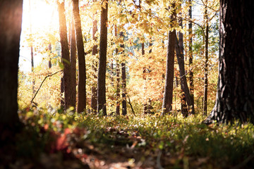 Beautiful forest in autumnal sunny day