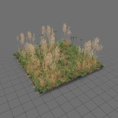 Grass meadow patch