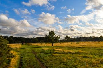Spoed Foto op Canvas Blauwe hemel Epping forest in London
