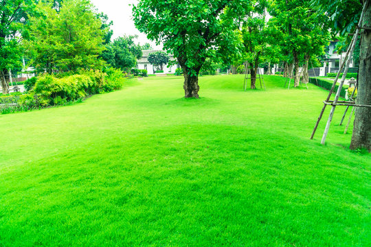 Beautiful gardens, green lawns, Front lawn for background, Garden design, Beautiful shady landscape, House with garden