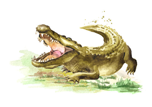 Wild attacker forward crocodile or Alligator with open mouth. Watercolor hand drawn illustration  isolated on white background