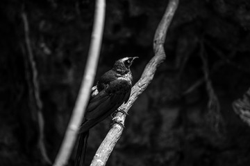 cute birds in the central park zoo in New York city black and white image