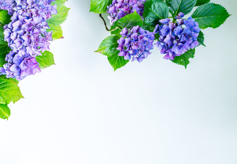 Spoed Fotobehang Hydrangea Beautiful, vintage style flora background with hydrangea or hortensia bloosom in the garden