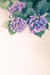 Fotobehang Bloemen Beautiful, vintage style flora background with hydrangea or hortensia bloosom in the garden