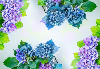 Printed roller blinds Hydrangea Beautiful, vintage style flora background with hydrangea or hortensia bloosom in the garden