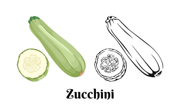 Zucchini vector illustration. Color image and black and white outline of squash whole and slice. Vegetable isolated on white background. Cartoon simple flat style.