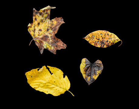 Leaves with plain background fall colors