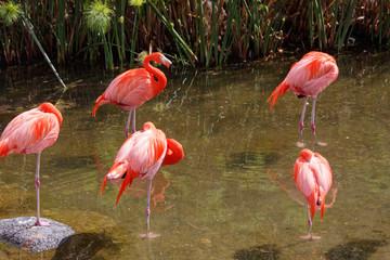 Pięć flamingów nad wodą