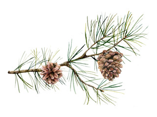 Watercolor botanical set with pine branches and cones. Hand painted winter holiday plants isolated on white background. Floral illustration for design, print, fabric or background.