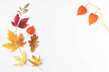 Autumn leaves frame, white background, copy space. Wall mural