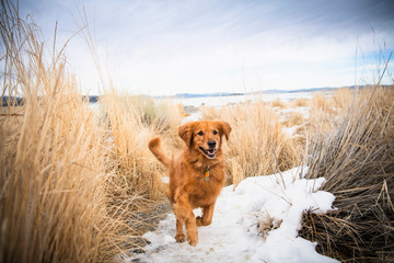 Dog running on snow covered fields