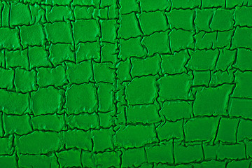 Wall Mural - Skin reptile as texture. Green crocodile skin. Snake background.